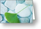 Pebbles Greeting Cards - Stones And A Gingko Leaf Greeting Card by Priska Wettstein