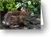 Jackrabbit Greeting Cards - Stop and Smell the Daisies Greeting Card by Barbara  White