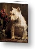West Highland White Terrier Greeting Cards - Stop and Smell the Flowers Greeting Card by Edward Fielding