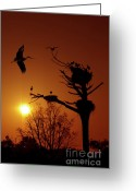 Warm Greeting Cards - Storks Greeting Card by Carlos Caetano