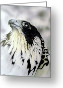 Falcon Drawings Greeting Cards - Storm Coming Greeting Card by Stan White