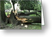 City Garden Greeting Cards - Storm Damage Greeting Card by Ria Novosti