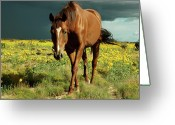 Storm Cloud Greeting Cards - Storm Horse Greeting Card by photo  Jennifer Esperanza
