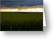 Mario Brenes Simon Greeting Cards - Storm over the canola fields Greeting Card by Mario Brenes Simon