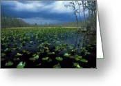 Lilly Pads Greeting Cards - Storms Coming Greeting Card by Kelly Bryant