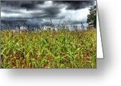 Cultivated Landscapes Greeting Cards - Stormy Harvest Greeting Card by Elizabeth Spencer
