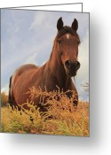 Quarter Horses Greeting Cards - Stormy Greeting Card by Jim Sauchyn