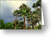 Storm Prints Greeting Cards - Stormy Skies and Palms Greeting Card by Sheri McLeroy