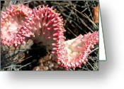 Flowers Photographs Greeting Cards - Strange Succulent Greeting Card by Deborah  Crew-Johnson