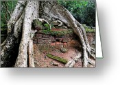 Fig Tree Greeting Cards - Strangler fig tree roots on ruins Greeting Card by Sami Sarkis