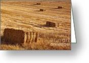 Feed Greeting Cards - Straw Field Greeting Card by Carlos Caetano