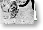 Concrete Greeting Cards - Stray life Greeting Card by Laura Melis