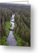 U.s. National Forest Greeting Cards - Stream And Boreal Forest, Tongass Greeting Card by Matthias Breiter