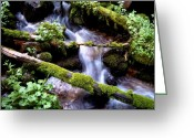 Conservationists Greeting Cards - Stream of Consciousness Greeting Card by Steven Milner