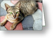 Green Eyes Greeting Cards - Street Cat On Concrete Blocks Greeting Card by Carlina Teteris