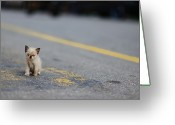 Double Yellow Line Greeting Cards - Street Kitten On Road Greeting Card by Carlina Teteris
