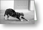 Paws Digital Art Greeting Cards - Stretch Greeting Card by Glennis Siverson
