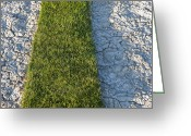 Mud Greeting Cards - Strip of Grass on Dried Mud Greeting Card by Thom Gourley/Flatbread Images, LLC