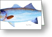 Hatteras Greeting Cards - Striped Bass Greeting Card by Carey Chen