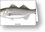 Caught Greeting Cards - Striped Bass Greeting Card by Charles Harden
