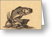 Saltwater Fish Greeting Cards - Striped Bass Greeting Card by Kathleen Kelly Thompson