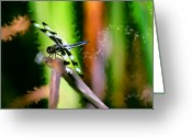 Transformative Art Greeting Cards - Striped Dragonfly Greeting Card by Lisa Redfern