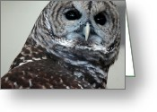 Snowy Night Greeting Cards - Striped Owl Greeting Card by LeeAnn McLaneGoetz McLaneGoetzStudioLLCcom