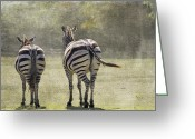 Zebra Photo Greeting Cards - Strolling Home Greeting Card by Rebecca Cozart