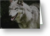 Playful Wolves Greeting Cards - Strong Wolf Greeting Card by Debra     Vatalaro