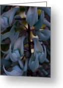 Tropical Gardens Greeting Cards - Strongylodon macrobotrys - Blue Jade Vine Greeting Card by Sharon Mau