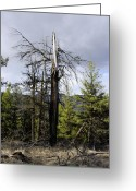 Greaves Greeting Cards - Struck by Lightning Tree Art Greeting Card by John  Greaves