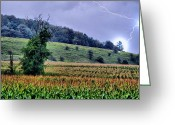Cornfield Greeting Cards - Struck Corn Greeting Card by Emily Stauring