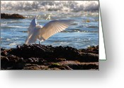 Clayton Photo Greeting Cards - Strut Greeting Card by Clayton Bruster