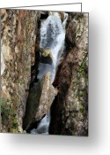 Cascades Greeting Cards - Stuck in the Middle Greeting Card by Christine Till
