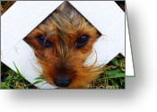 Brown Eyes Greeting Cards - Stuck On You Greeting Card by Karen Wiles