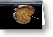 Fallen Leaf Greeting Cards - Stuck on You Greeting Card by Robert Ullmann