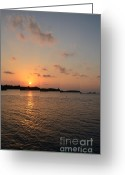 Tropical Island Greeting Cards - Study in Orange Greeting Card by Corinne Rhode