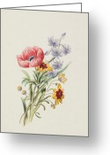 Watercolor On Paper Greeting Cards - Study of wild flowers Greeting Card by English School