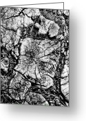 Aged Digital Art Greeting Cards - Stumped Greeting Card by Mike McGlothlen