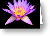 Spritual Greeting Cards - Stunning Waterlily Greeting Card by Vijay Sharon Govender