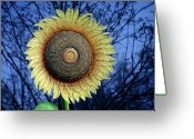 Showy Greeting Cards - Stylized Sunflower Greeting Card by Tom Mc Nemar