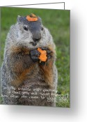 Groundhog Greeting Cards - Succeeding Greeting Card by Paul W Faust -  Impressions of Light