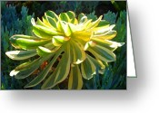 Cactus Flower Digital Art Greeting Cards - Succulent Backlit on Blue 4 Greeting Card by Amy Vangsgard