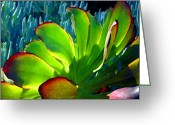 Cactus Flower Digital Art Greeting Cards - Succulent Backlit on Blue 5 Greeting Card by Amy Vangsgard