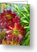 Cactus Flower Digital Art Greeting Cards - Succulent Garden Greeting Card by Amy Vangsgard