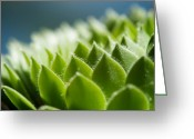 Succulents Greeting Cards - Succulent Greeting Card by Lisa Knechtel