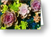 Succulents Greeting Cards - Succulent Pond 4 Greeting Card by Amy Vangsgard