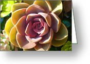 Cactus Flower Digital Art Greeting Cards - Succulent Pond 5 Greeting Card by Amy Vangsgard