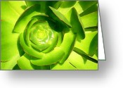 Cactus Flower Digital Art Greeting Cards - Succulent Square Close Up 5 Greeting Card by Amy Vangsgard
