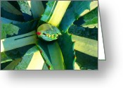 Cactus Flower Digital Art Greeting Cards - Succulent Square Close-Up 6 Greeting Card by Amy Vangsgard